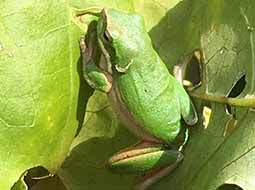 Build garden to attract frogs