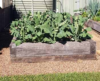 Vegetable Bed Maintenance